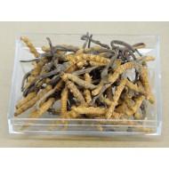 SR-2600 Pieces Cordyceps Sinensis